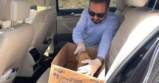Başkan Gürbüz, Yavru köpeği makam arabası ile veterinere götürdü