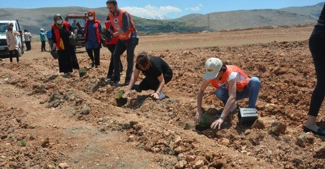 Elbistan'da sivil toplum kuruluşu üyeleri lavanta fidesi dikerek belediye çalışmalarına destek oldu