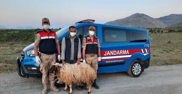Afşin'de 56 küçükbaş hayvan çalan hırsızlar yakalandı: 7 gözaltı