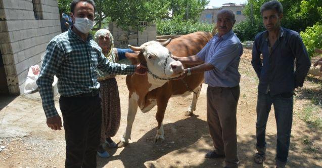Elbistan'da geçim sıkıntısı çeken aileye inek hediyesi