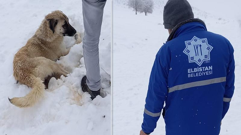 Elbistan Belediyesi'nden yaralı köpeğe şefkat eli