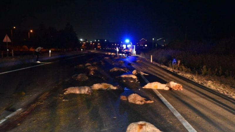 Kahramanmaraş'ta katliam gibi kaza: 65 koyun telef oldu!