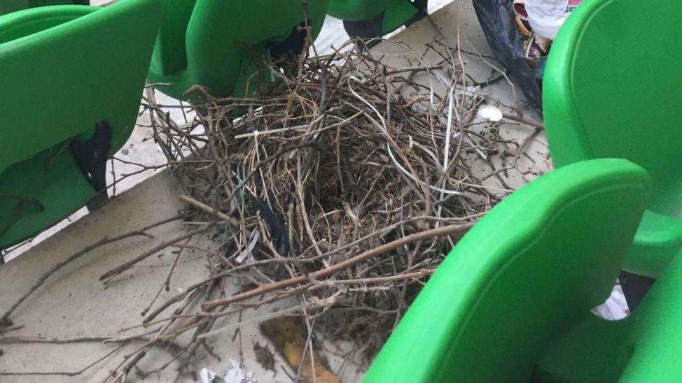 Stadyum pandemiden boş kalınca kuşların yuvası oldu!