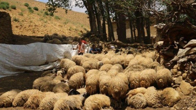 Van'da Mermer Ocağı Uğruna Hayvanlar Ahırsız Kaldı: Nereye Gidelim?