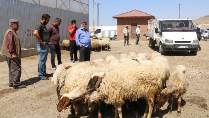 Van'daki Besiciler: Hayvanlarını Satışa Çıkardılar