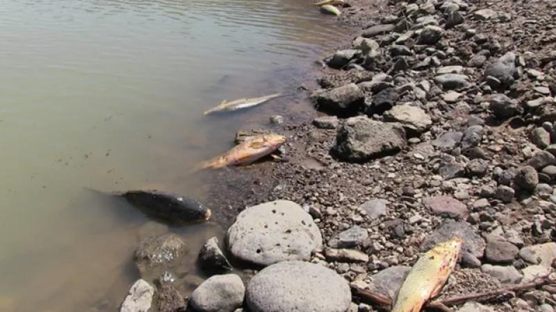 Van'da Toplu Balık Ölümleri
