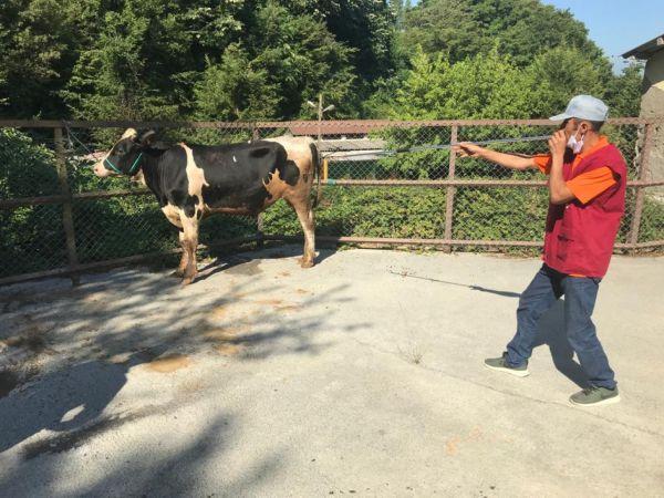 Zonguldak'ta kurbanlık hayvan yakalama timi kuruldu