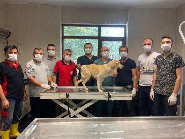 Ayağı kırık bulunan sokak köpeği ameliyatla tedavi edildi