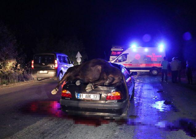 Düzce'de ineklere çarpan otomobildeki iki kişi yaralandı