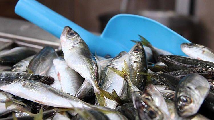 Su ürünleri ihracatı yüzde 38 arttı