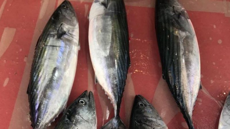 Karadeniz'de hamsi avı henüz başlamadı