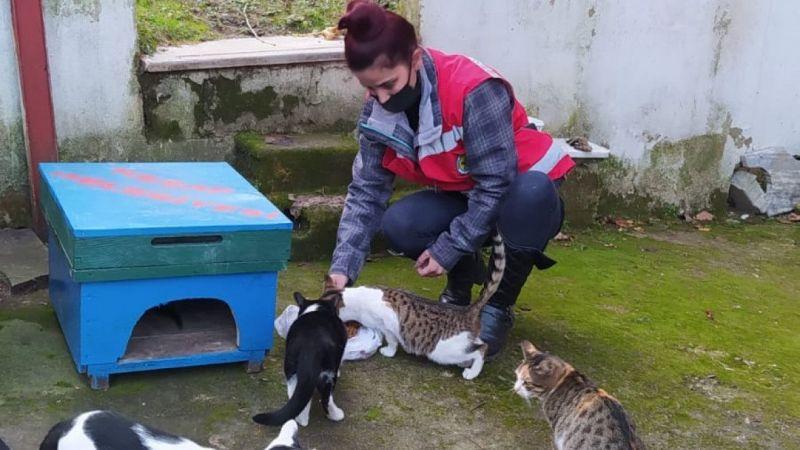 Keşap Belediyesinden sokak hayvanları için mama desteği sürüyor