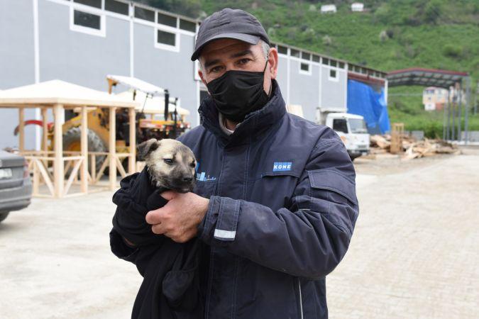 Giresun'da derede mahsur kalan köpek yavrusu kurtarıldı