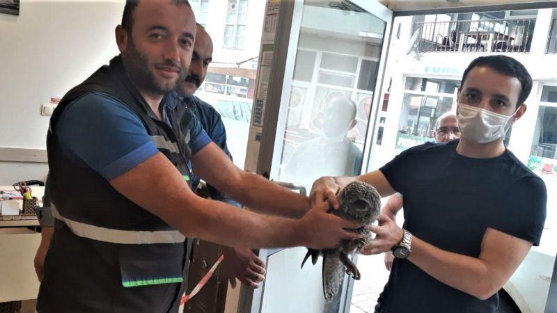 Çoruh Edaş Ekipleri Yaralı Baykuşun Yardımına Koştu