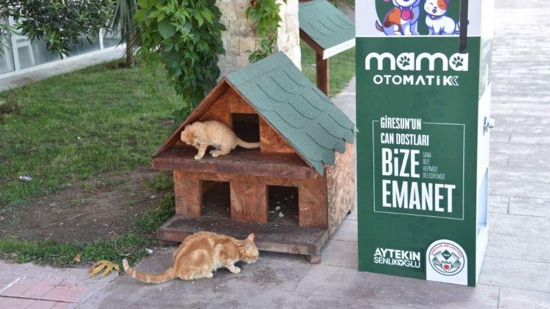 Sokak Hayvanları İçin Mamamatik Uygulaması