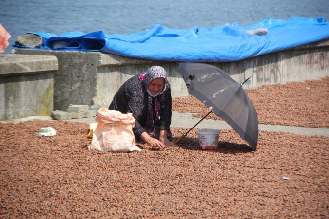 Giresun serbest piyasasında 2021 ürünü fındık fiyatı sezona 25 liradan başladı