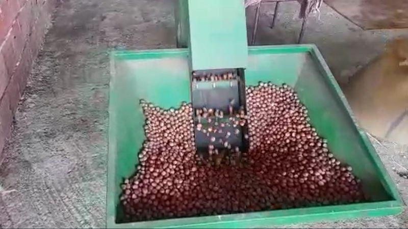 Fındık Üreticisi Fındıkları Kurutmak İçin Çözümler Arıyor