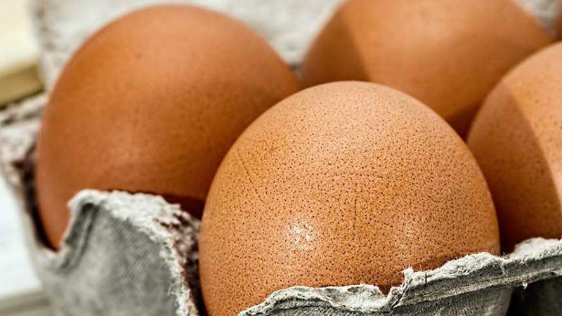 Doğal Yumurta ile Para Kazanma Yolları