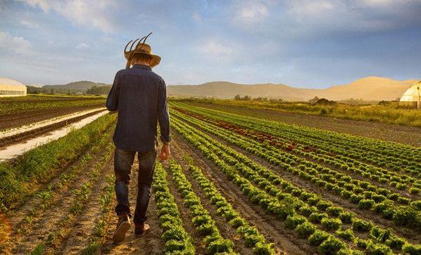 Çiftçiler İsyanda: Ekmeğin Fiyatı Artabilir!