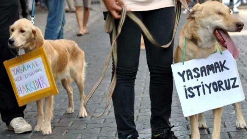 Hayvan hakları yasayla ilgili AK Parti'den beklenen açıklama