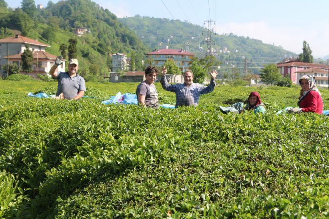 Çay ve fındık işçilerinin gelmesiyle Karadeniz'de vaka sayısı 4'e katladı!