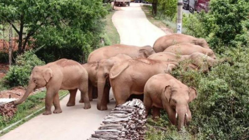 14 filin göçü için 150 binden fazla kişi tahliye edildi