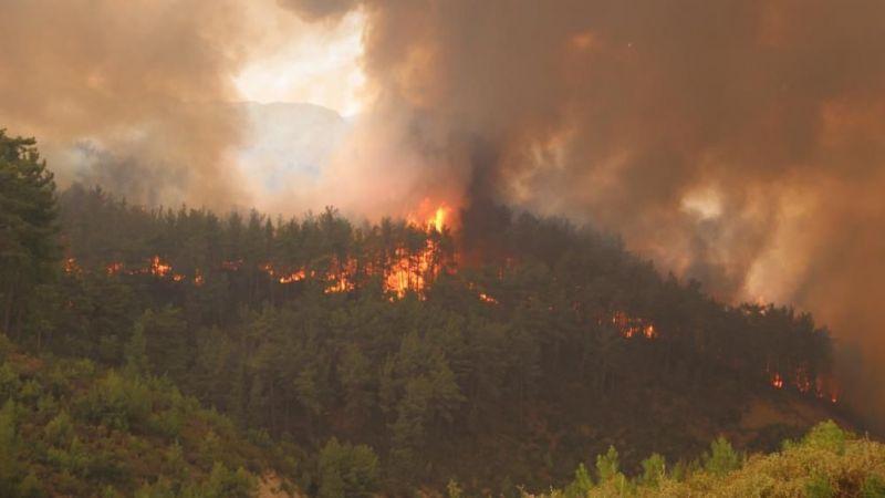 Türkiye'de bu yaz ne kadar orman yandı?