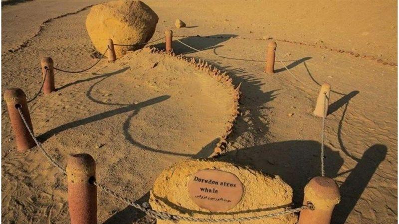 43 milyon yıllık 4 ayaklı balina fosili keşfedildi