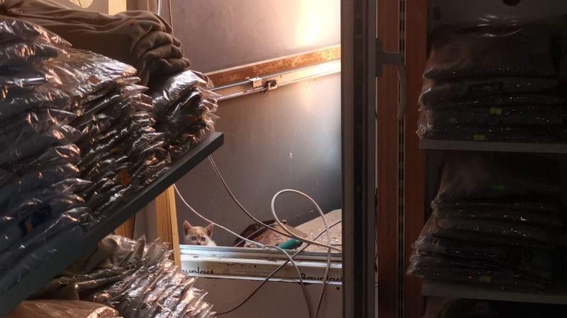 İş yerinin tabelasında mahsur kalan kedi yavrusunu itfaiye kurtardı