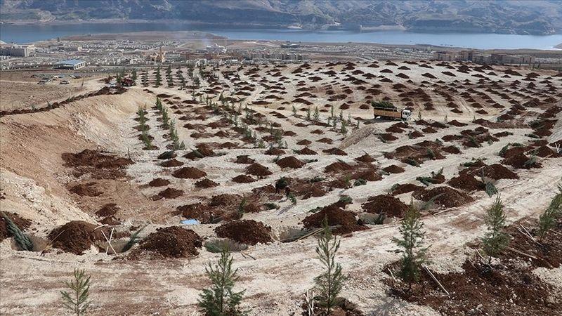Türkiye'de çölleşme ve kuraklıkla mücadele çalışmaları aralıksız sürüyor