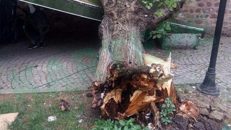 İzmit'te şiddetli rüzgar, dev çınar ağacını yıktı