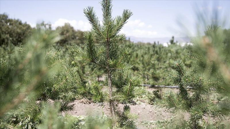 TOBB'dan yanan ormanları eski haline dönüştürmek için 5 milyon liralık destek