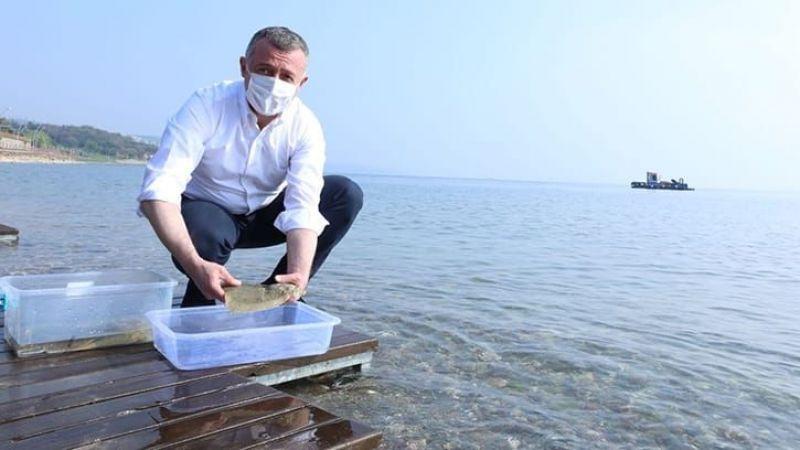 İzmit Körfezi'ne salınan kalkan balığı 10 ayda 740 gram aldı