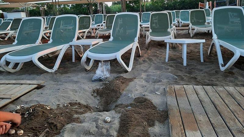 Antalya'da bir otelin ahşap yürüme yoluna sıkışan 60 caretta caretta yavrusu ölü bulundu