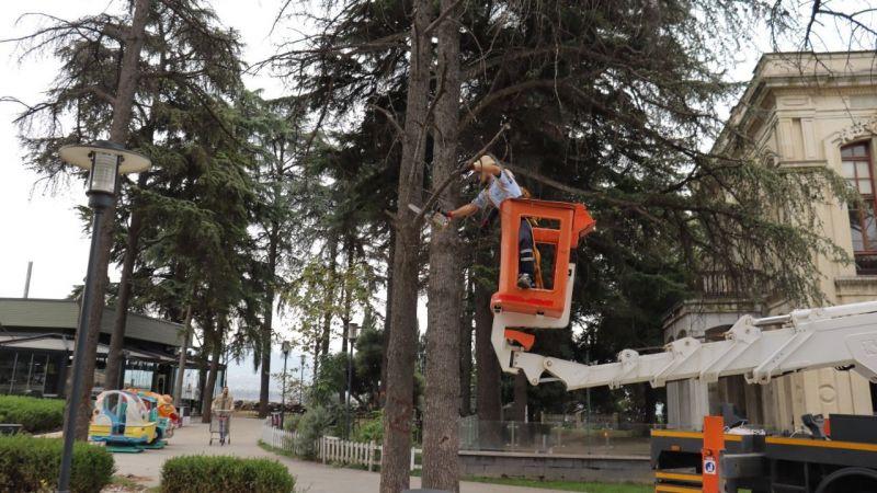 İzmit Belediyesi tehlike arz eden ağaçlar için önlem alıyor