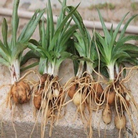 İzmit Belediyesinden yeni tarımsal hamle