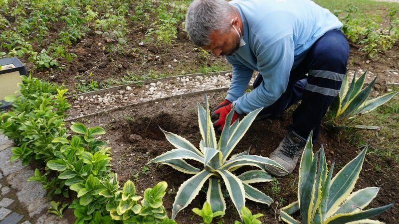 İzmit Belediyesi Tıbbi-Aromatik Bitkiler Bahçesi bakımdan geçti