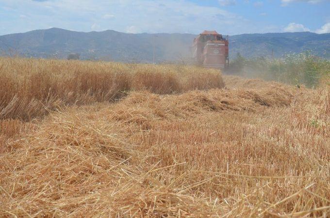 """Aydın'da Buğday Hasadı Başladı! """"Buğday Üreticisi Kazanacak"""""""
