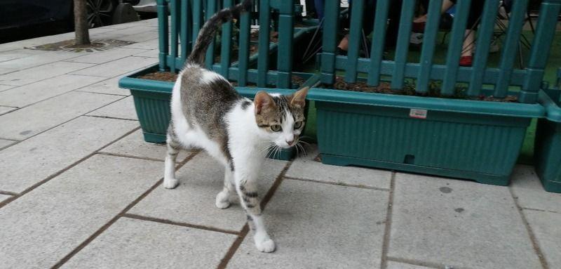Kedi Yediğini İtiraf Eden Japon Vatandaşı Sınır Dışı Edilecek