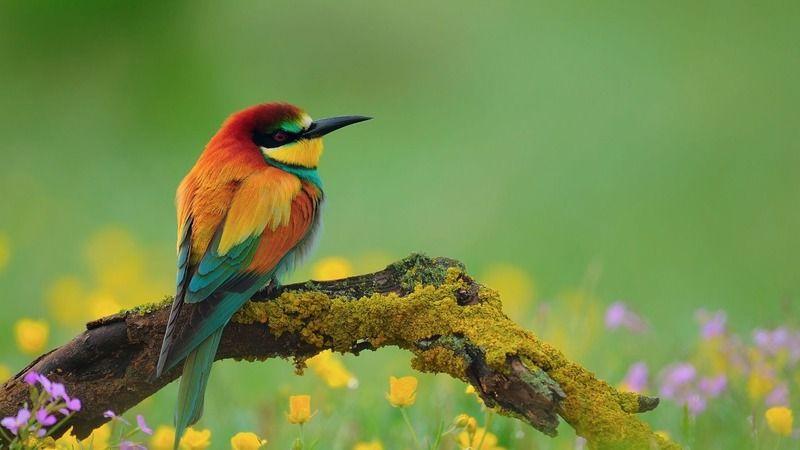 Bu Haberden Sonra Kimse Kimseye 'Kuş Beyinli' Diye Hakaret Edemeyecek