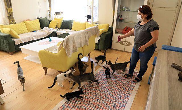 Emekli Maaşını Kedilere Harcadı, İcralık Oldu