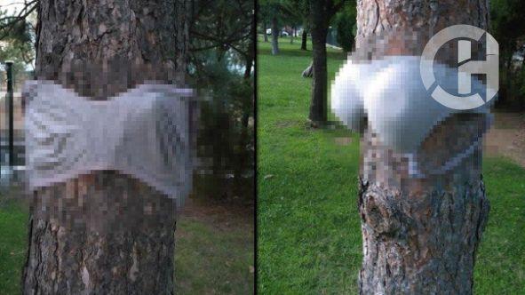 Parktaki çam ağaçlarına kadın iç çamaşırı astılar