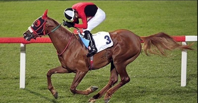 28 Ocak Perşembe Şanlıurfa at yarışı tahminleri! 28 Ocak Şanlıurfa altılısı