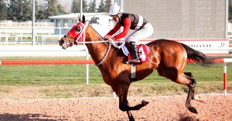 23 Şubat 2021 yabancı at yarışı tahminleri! 23 Şubat yabancı altılı tahminleri