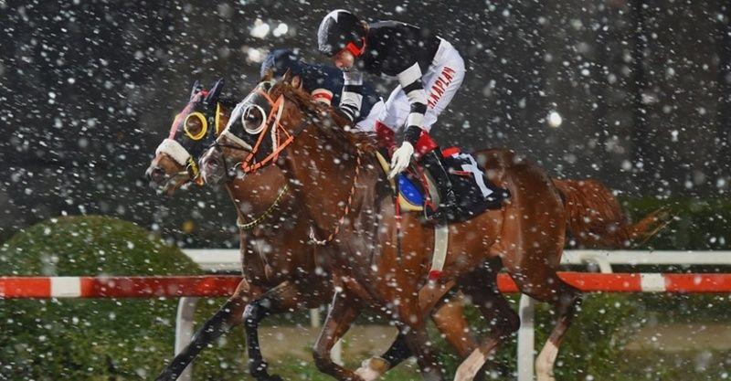 TJK canlı 16 Mart at yarışı sonuçları! 16 Mart 2021 Adana Kocaeli altılı ganyan sonuçları