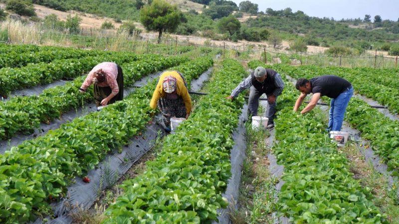 Çiftçilerin izin belgesi alması gerekli mi? Bakanlıktan açıklama
