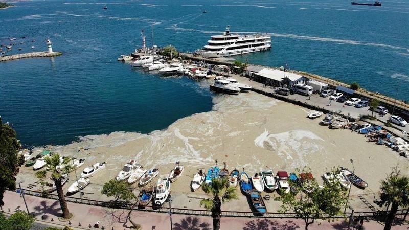 Marmara Denizi'nde görülen deniz salyasının nedenleri