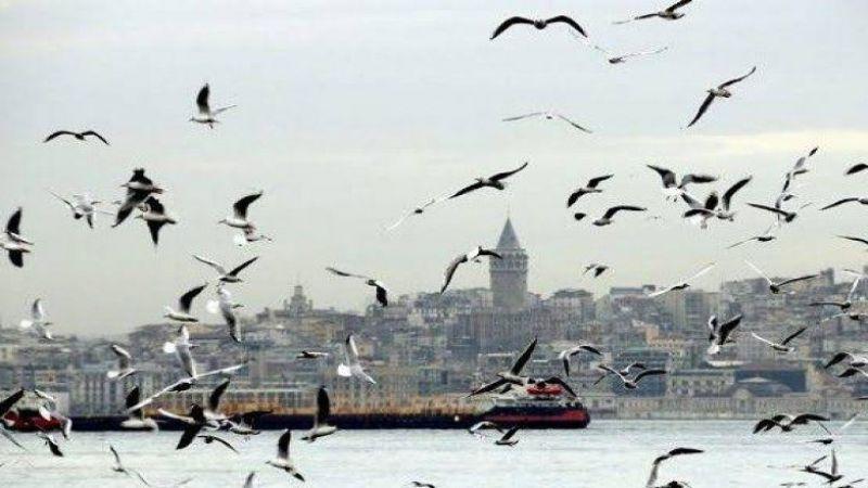 İstanbul'da koronavirüsünden sonra ikinci virüs endişesi!