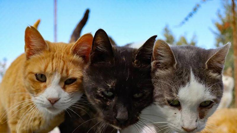 """İstanbul'da korkunç olay! """"Yavru kedileri evine çıkartıp yemiş"""""""