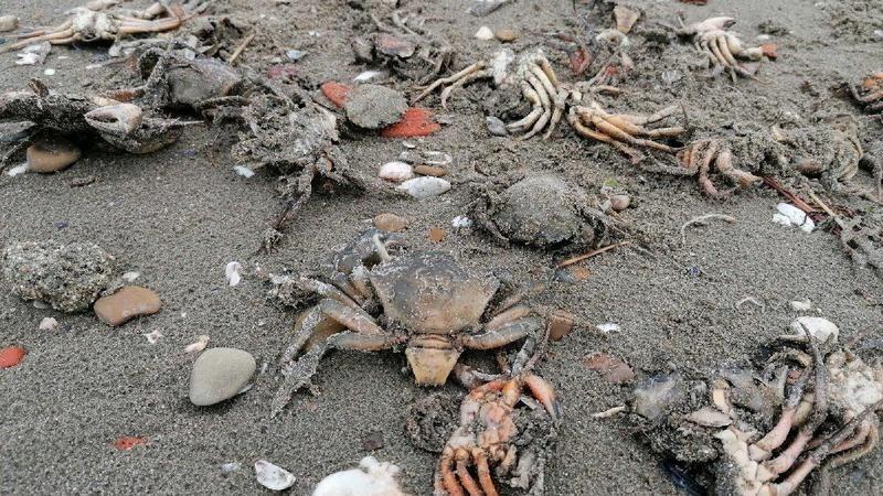 Marmara Denizi'ne felaketler bir bir geliyor